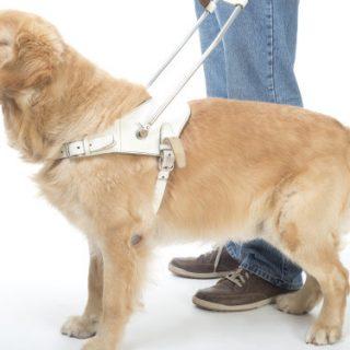 Discriminarea persoanei cu dizabilități însoțită de câinele-ghid